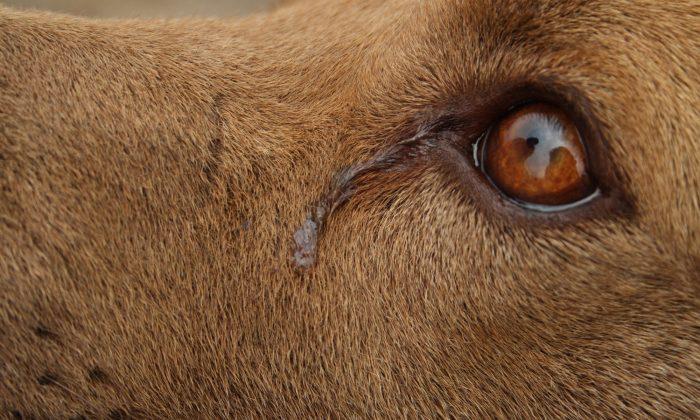 Dog 'Cries' Every Night While She Awaits Adoption, Shelter Shares Sad Photo As Last Hope