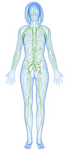 7 Ways to Improve Lymphatic Health